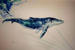 Whale sketch by LucieWalton