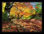 Autumn colors by joffo1
