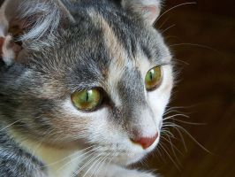 Close up Kitty by brandychristine1987