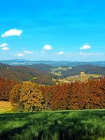 Forest scenery with panoramic view by patrickjobst