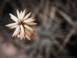 Unbloomed from Above. by KBeezie