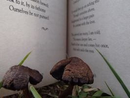 If a Mushroom could read a book... by OssieLovesT