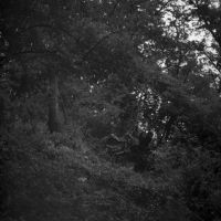 forrest IV by izzy68