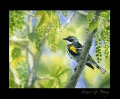 Warbler on the Watch by LG-Young
