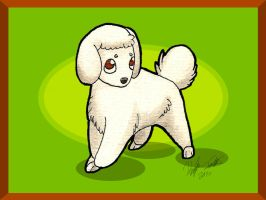 Toy Poodle MiniPup by anime-fan-addict