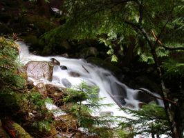 creek in olallie by crazytmac