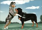 CM - Aussie and rottie by Do-El