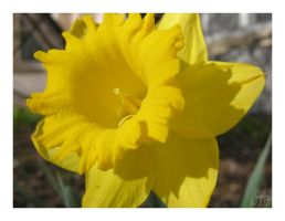 You Are My Sunshine by cera