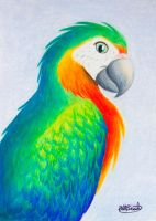 Catalina Macaw by tuftedpuffin