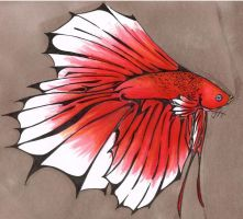 Male Crown Tail Butterfly Pattern Betta by horner735