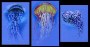 Jellies by illogan