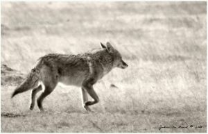 In Pursuit by Black-White-Club