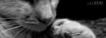 Golden Tabby Close-up [Banner Style] by DenNiKon
