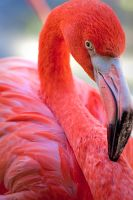 Flamingo-089 by JessicaM