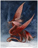 Dragonlet by emla