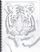Tiger by OvenMittensForGandhi