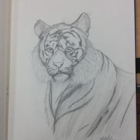 Tiger Sketch by AnamayCat