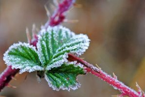 frost by LucieG-Stock
