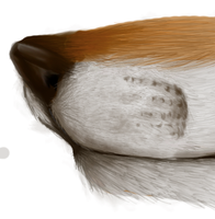A fox muzzle XD by paper--notes