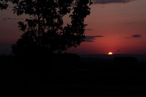 sunset behind trees 2 by pLateauce