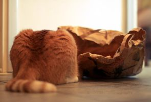 cat and the bag by AndrasZsolt