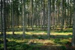 Forest Stock 43 by Sed-rah-Stock