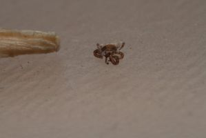 Tiny Tick by andabata