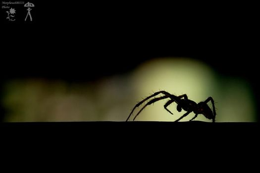 Spider silhouette by morpheus880223