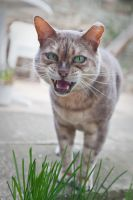 Wild pet cat by RichieSmith27