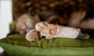 Little Pink Teddy Bear Paws by MissSpocks
