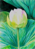 Lotus by jakhont