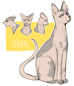 Havok by meatrot