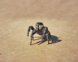 curious spider by imthinkingoutloud