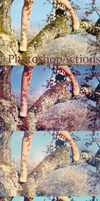 Photoshop Actions 14 by oridzuru