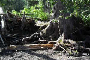 Rugged Roots by Nazieri