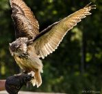 eagle_owl by PiTurianer