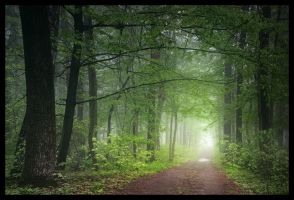 Green world: Light by manroms