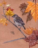 House Sparrow by KristynJanelle