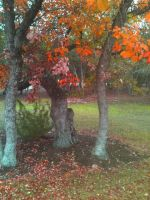 Autumn Leaves on a Rainy Day by Rinni-Boo