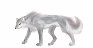 Grey wolf by RayCrystal