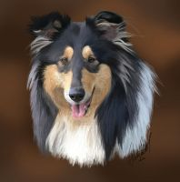 Hailey the Rough Collie by tussensessan