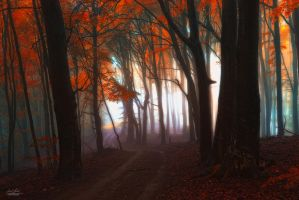 -Astral road through the wood- by Janek-Sedlar