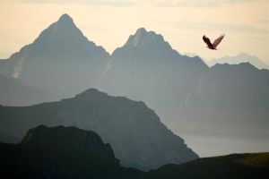 Lofoten Eagle by Waylandscape