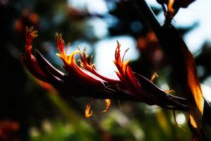 It's Summer by Bazz-photography