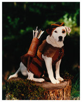 Wishbone Press Photo - Robin Hood by The-Toy-Chest