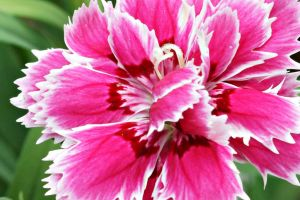 Pink flower 3 by a6-k