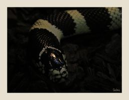Marble Snake by Sedma