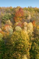 Real Color Palette by miroslav-petrinec