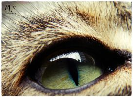 In the depth of the eye by moonik9