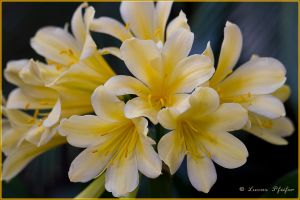 Yellow bloom by black-sunray